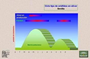 Eriofidos Ciclo Biológico