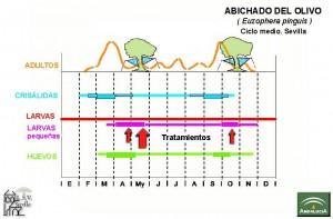 Euzophera_Ciclo y Tratamiento