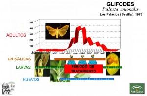Glifodes ciclo y tratamiento