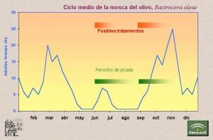 Mosca del Olivo ciclo biológico